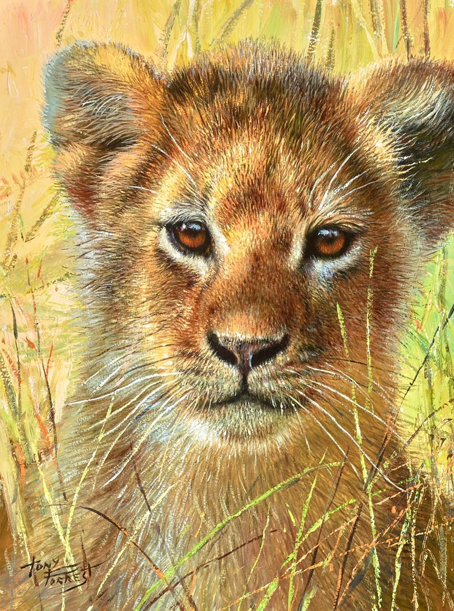 Baby of Maasia Mara